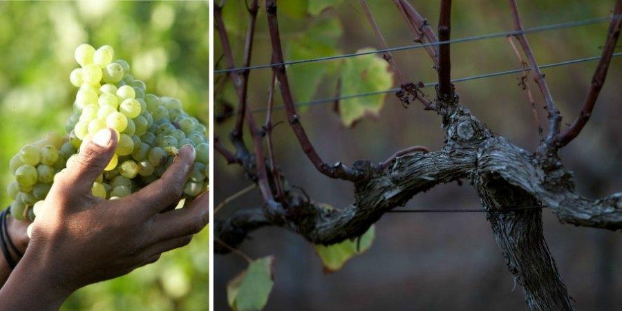 shopify_winefarming_900x450